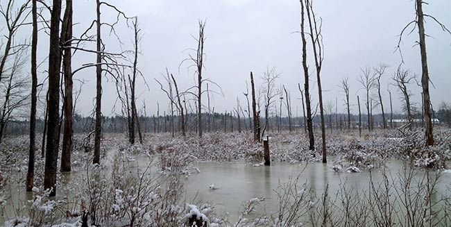 Ballston Creek Preserve established and conservation easement placed on Peterson Property
