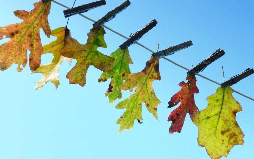 guide to saratoga fall foliage